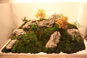 bonsai-w-140508-11