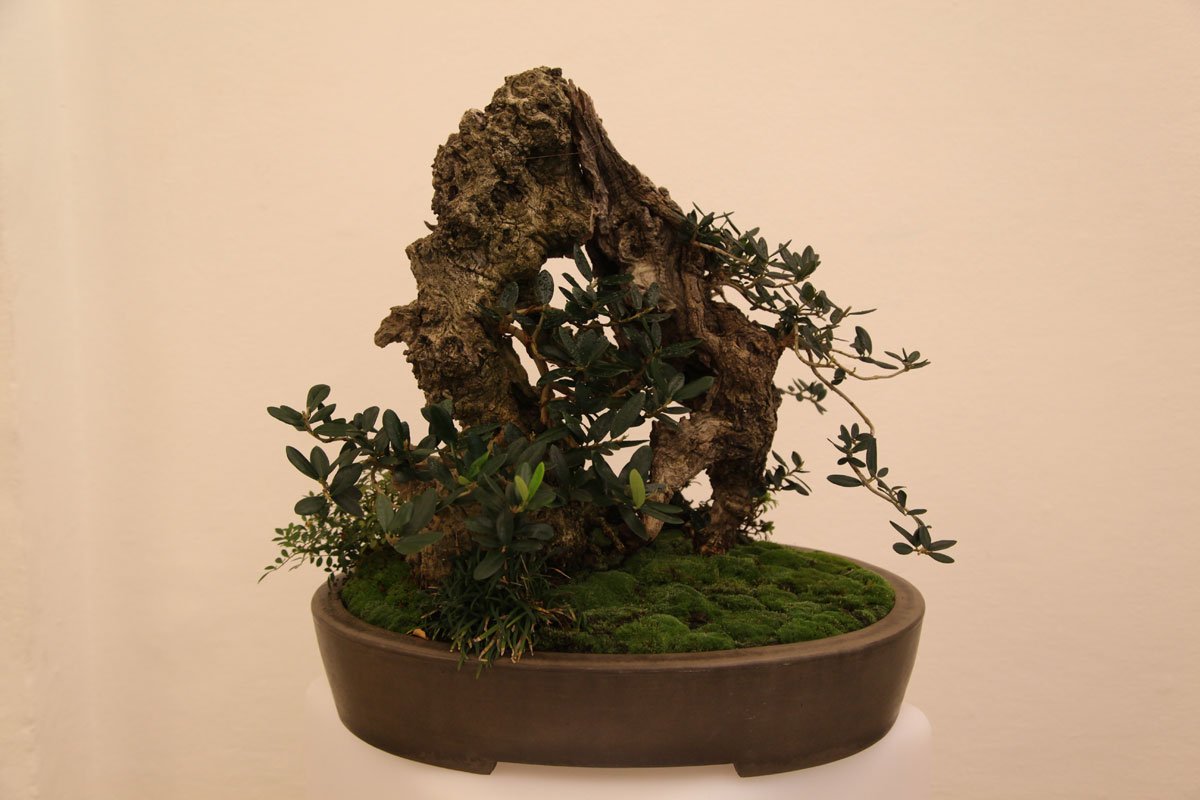 bonsai-w-140508-7