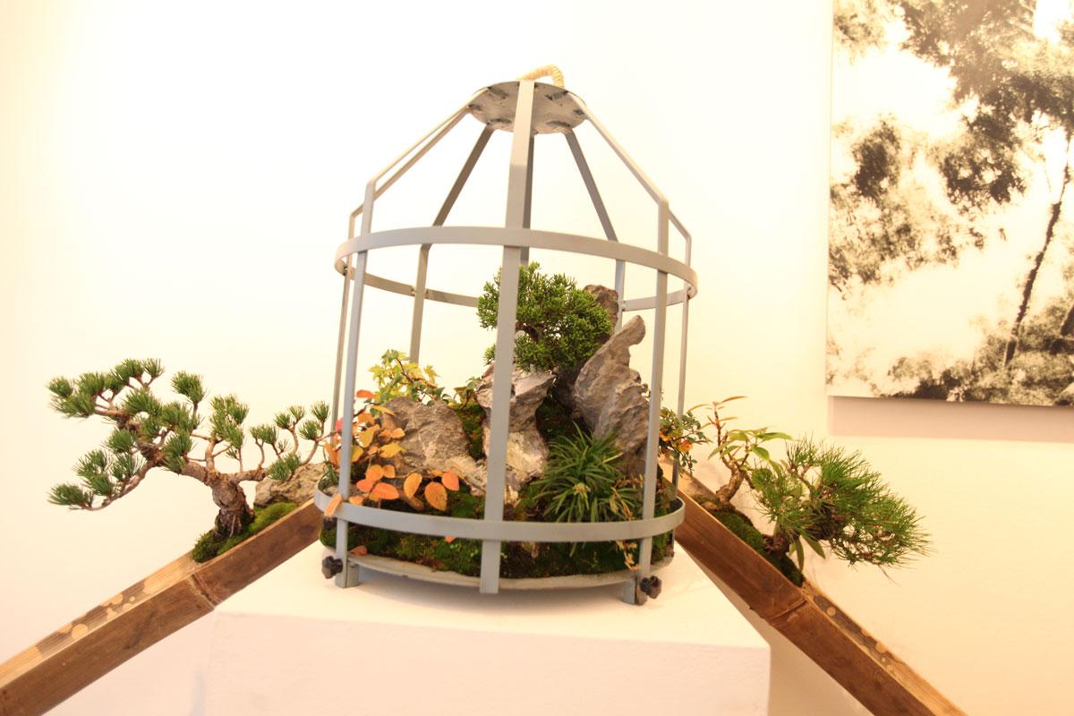 bonsai-w-140508-5