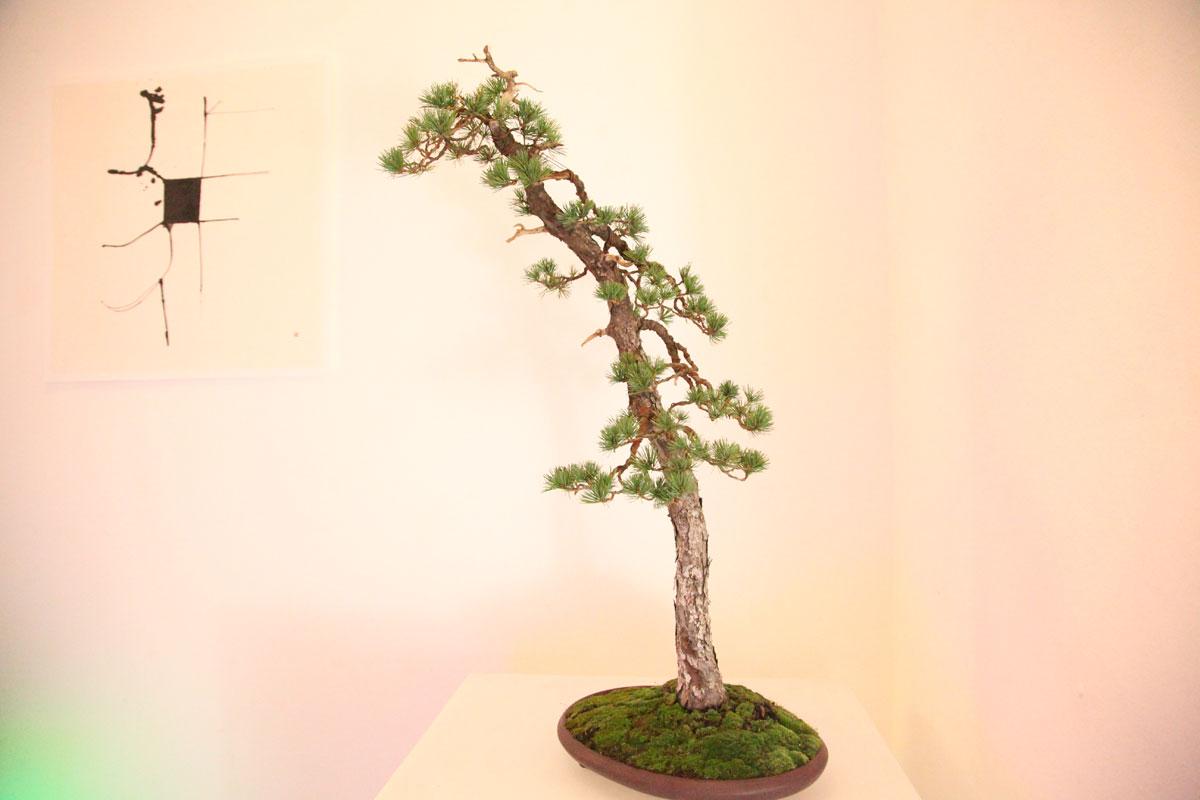 bonsai-w-140508-6